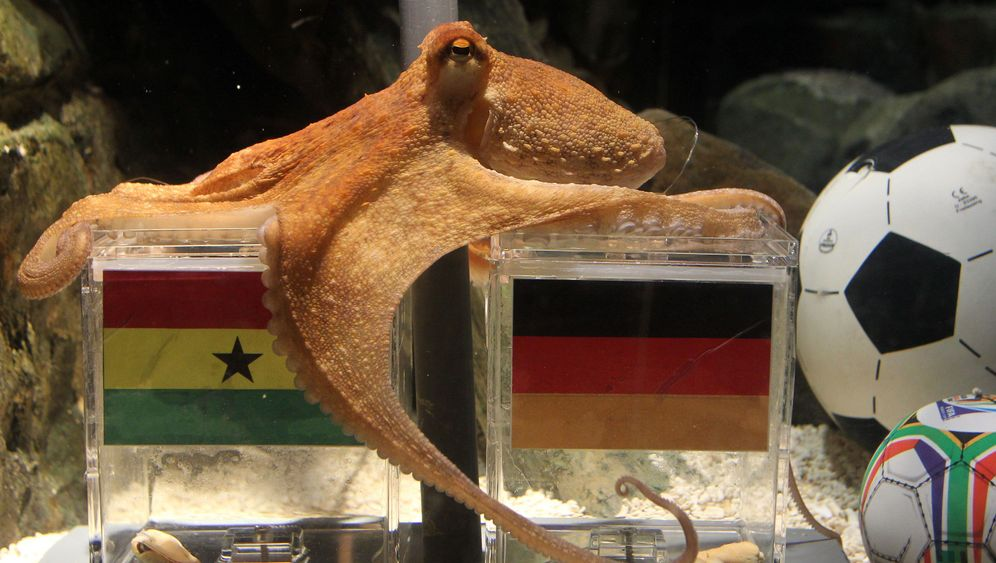 Photo Gallery: Animals Predict World Cup Matches