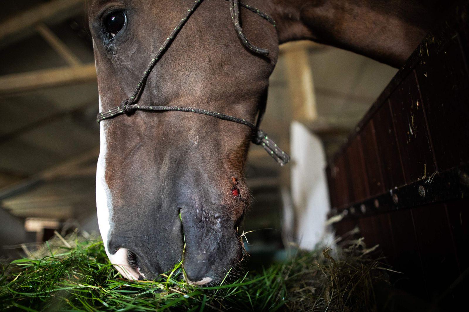 FRANCE-AGRICULTURE-ANIMALS-INVESTIGATION