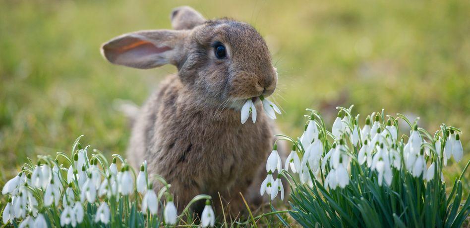 A rabbit enjoying the spring sunshine.