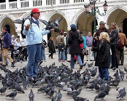 Tauben auf dem Markusplatz: Schluss mit den Reiskörnern