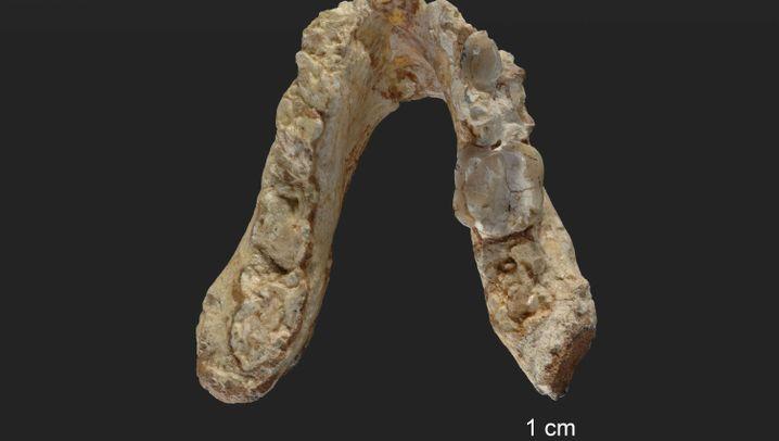 Wiege der Menschheit: Knochenfunde aus Südosteuropa