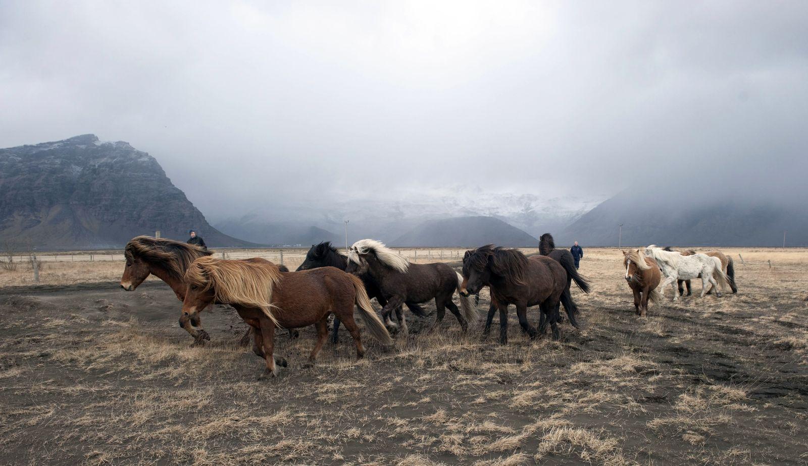 ICELAND-VOLCANO-ERUPTION-ANIMA