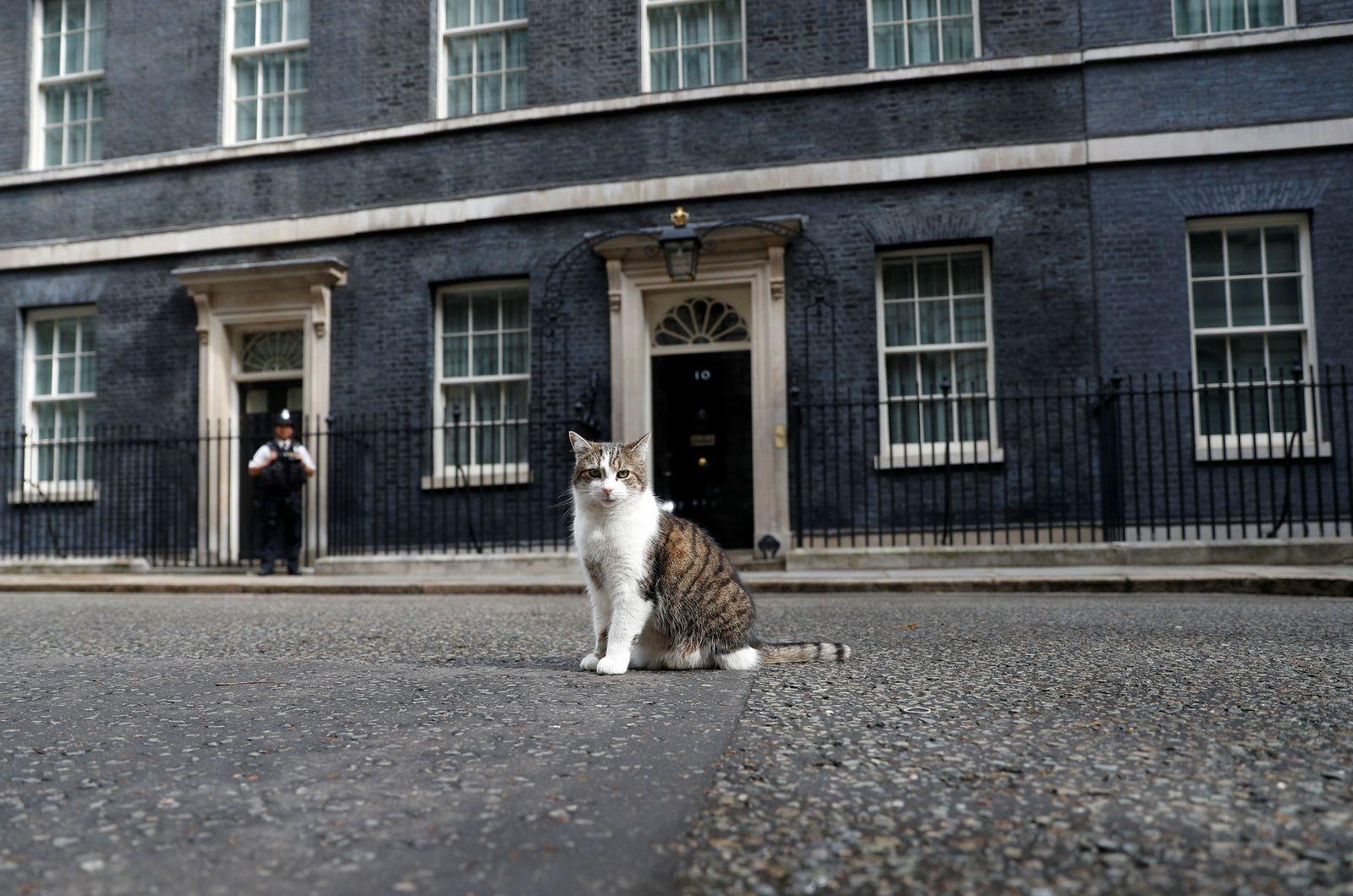 Larry, Hauskatze in Downing Street