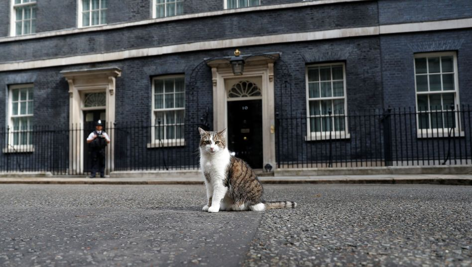 """""""Chief Mouser"""" Larry: Lebt seit 2011 in Downing Street"""
