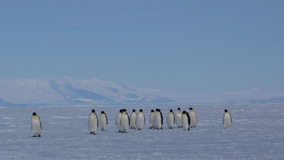 Efforts to set aside marine reserves in the oceans around Antarctica failed on Tuesday.