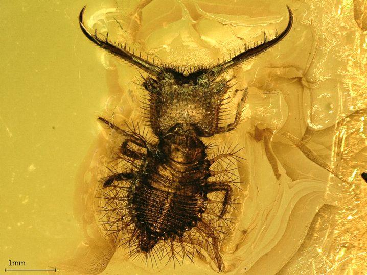 Insekt in Bernstein
