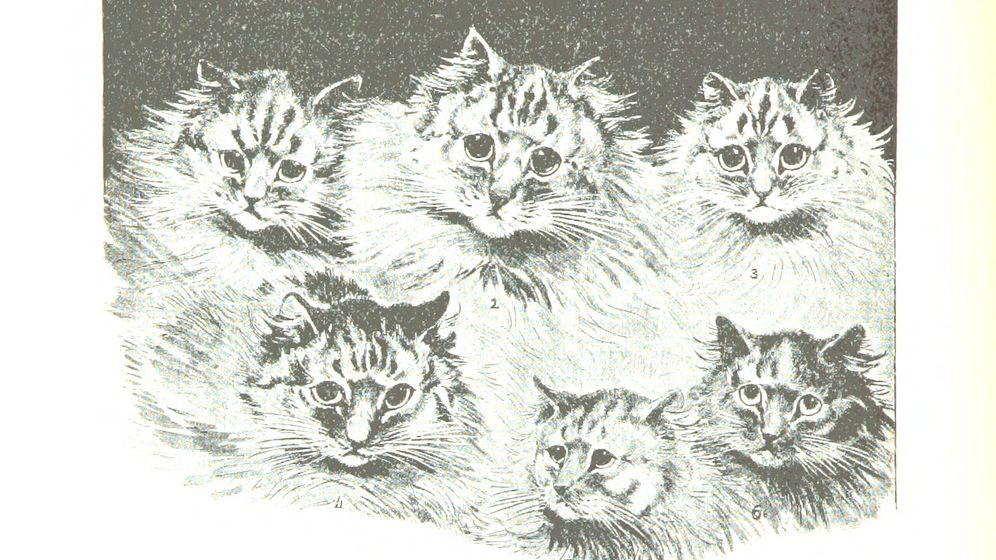 Grafiken der British Library: Katzen, Eulen und der Superkleber