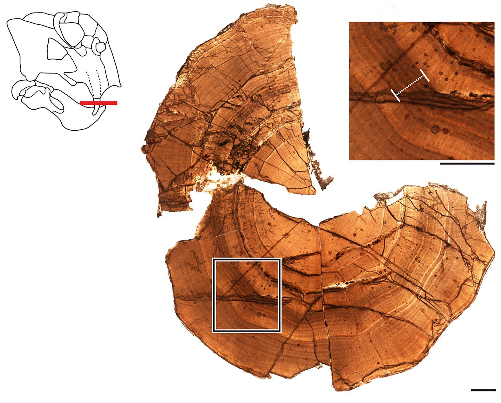 Dossier: Schon vor 250 Millionen Jahren hielten Tiere womöglich W