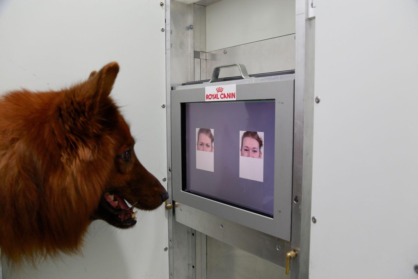 EINMALIGE VERWENDUNG Hunde/ Gesichtsausdruck