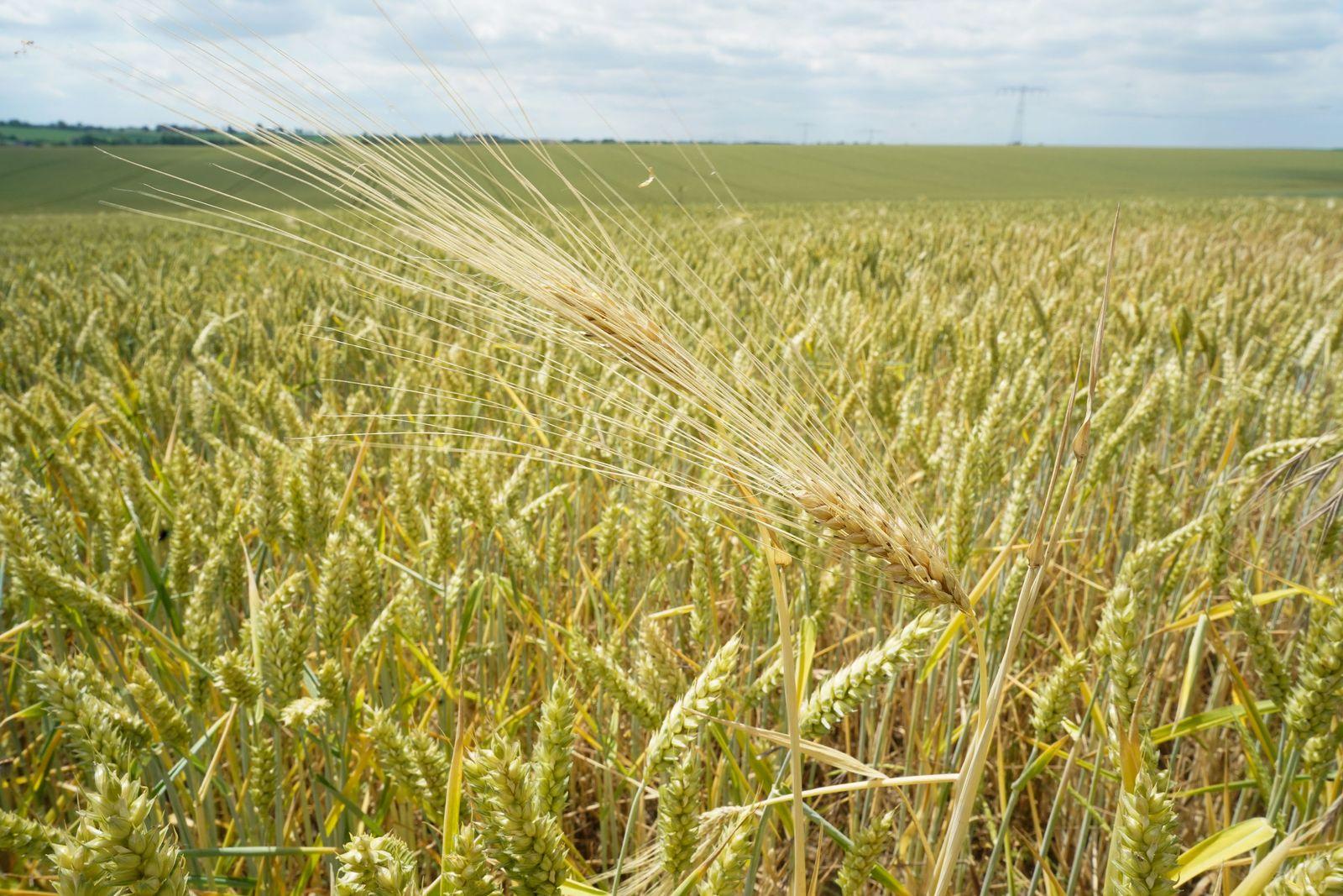 Trockene Witterung setzt Bauern zu