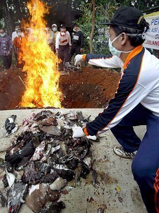 Hühnerverbrennung in Jakarta: Indonesien meldet neue H5N1-Infektionen