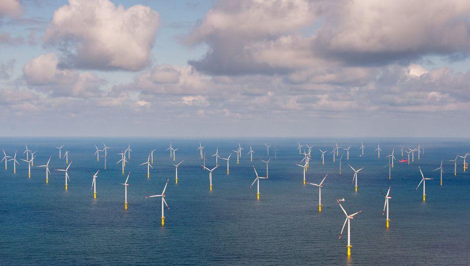 Offshore-Windpark Butendiek vor Sylt