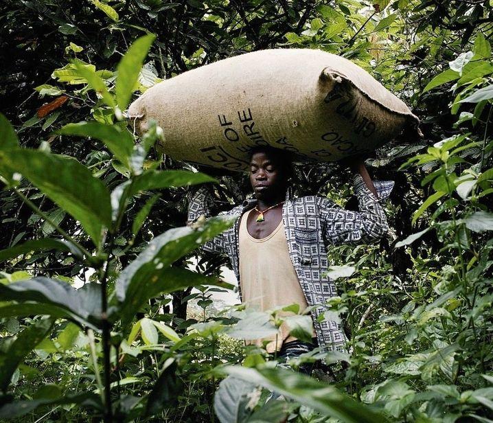 80 Kilogramm – so viel wie ein aus- gewachsener Mann – wiegt dieser Sack mit Kakao, den der Träger durch eine Plantage in der Elfenbeinküste schleppt