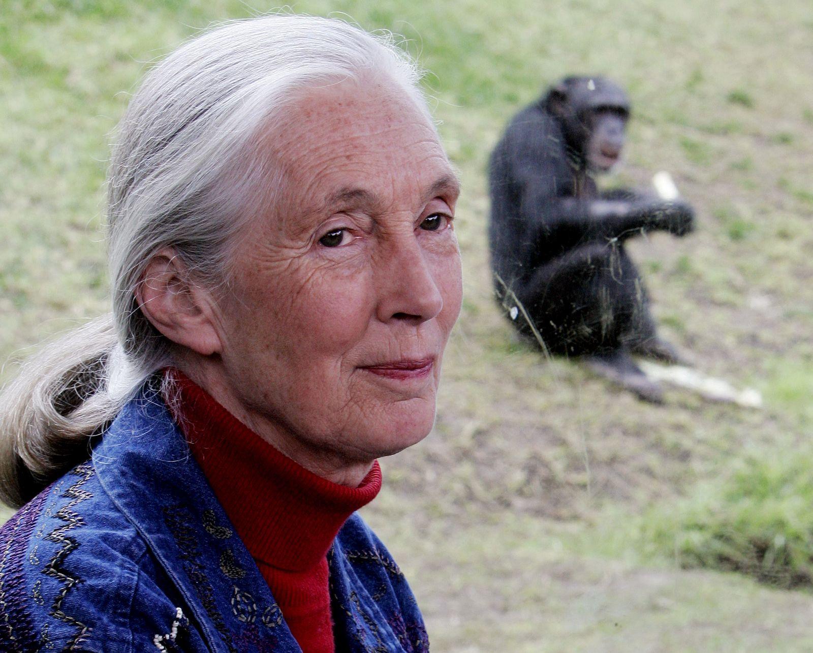 Jane Goodall / Schimpanse