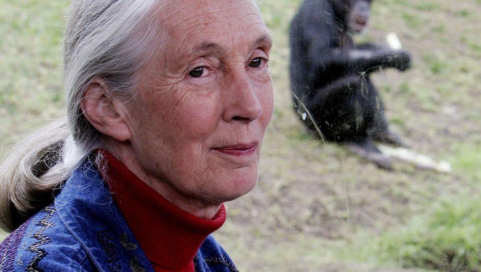 Jane Goodall (Archivbild): Forschungsgebiet mit vielen renommierten Frauen