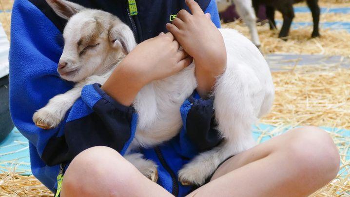 """Goat Yoga"": Ziegengruß"