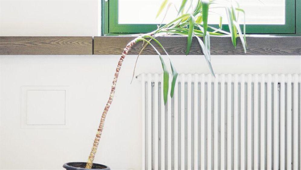 Vergessen und vertrocknet: Pflanzen in deutschen Büros