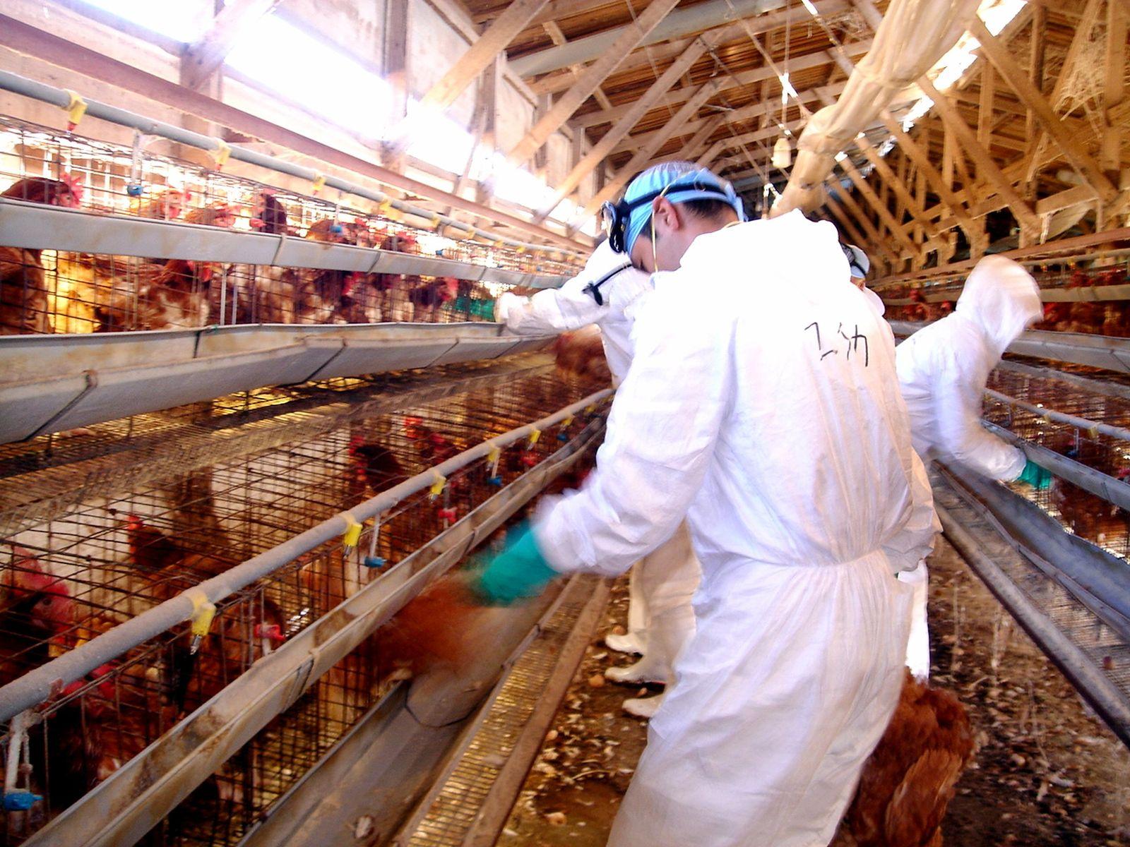 Vogelgrippe / Japan