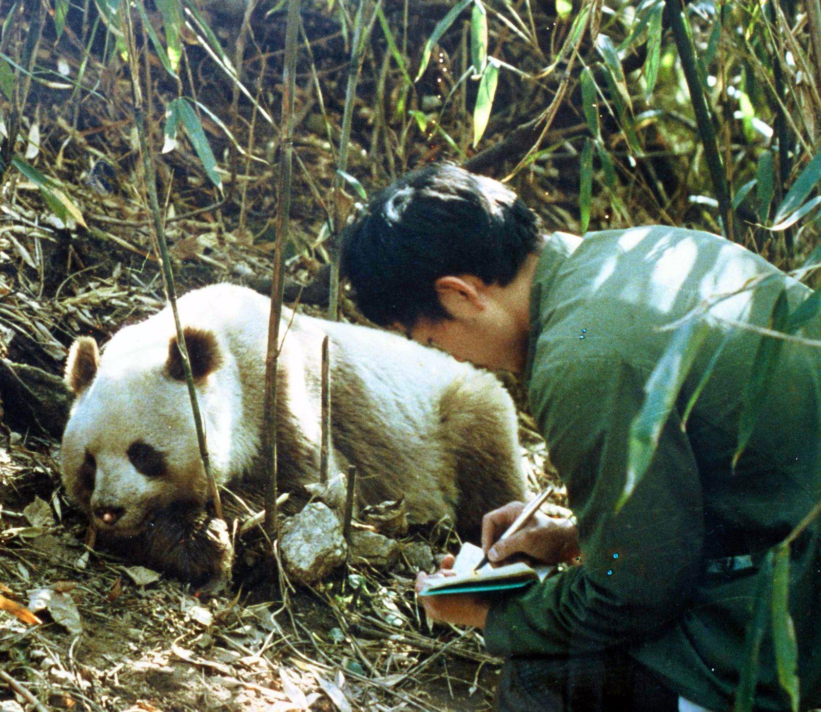Klimawandel / Bambus / Panda