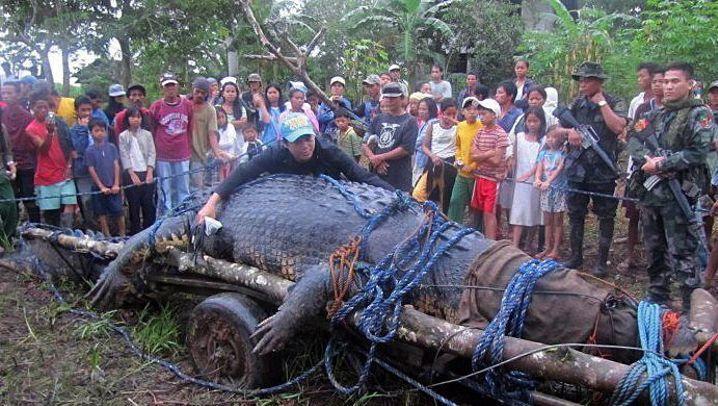 Gigantisches Reptil: Riesenkrokodil Lolong ist tot
