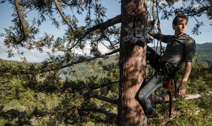"""""""Guardian""""-Systeme werden weit oben in Baumwipfeln installiert - damit die Solarzellen Sonne haben"""