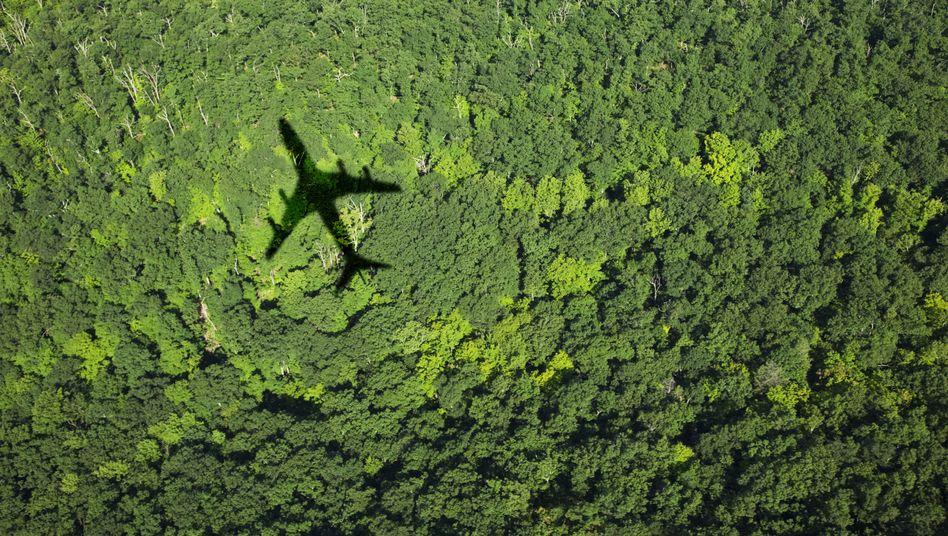 Flugzeug über Wald: Tickets sollen teurer werden