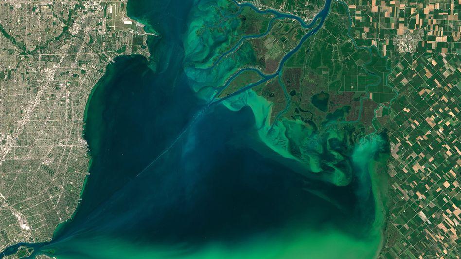 Von Algen befallener Lake St. Clair - eine Verbindung zwischen Huronsee und Eriesee