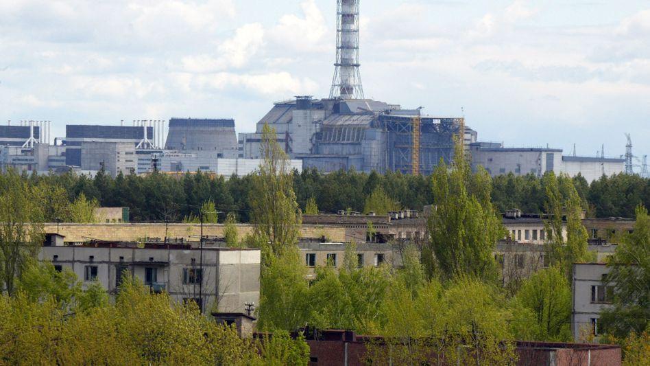Atomkraftwerk Tschernobyl (Mai 2007): Pflanzen können sich der Strahlung anpassen