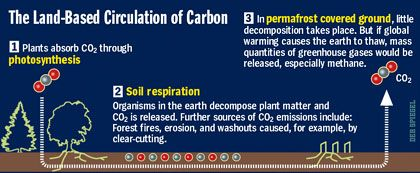 Graphic: The Land-Based Circulation of Carbon