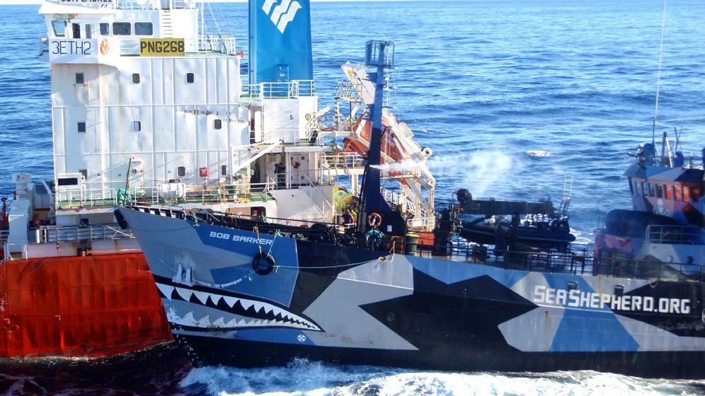 Walfang: Kampf auf hoher See