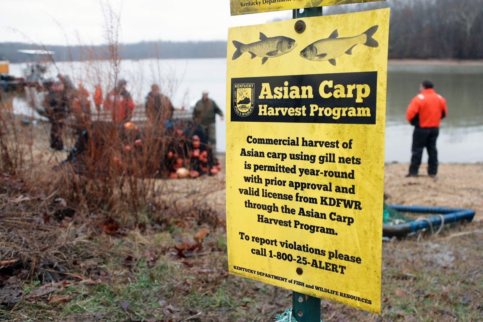 Carp Invasion