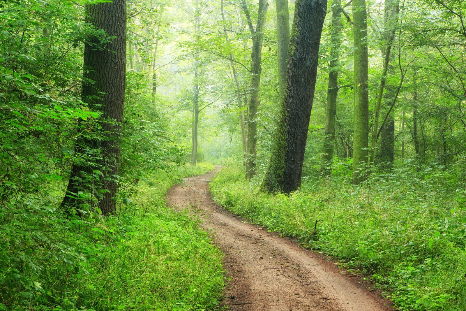 Wanderweg windet sich durch naturnahen dichten Auenwald an der Saale, bei Plötzkau, Sachsen-Anhalt, Deutschland *** Hiki