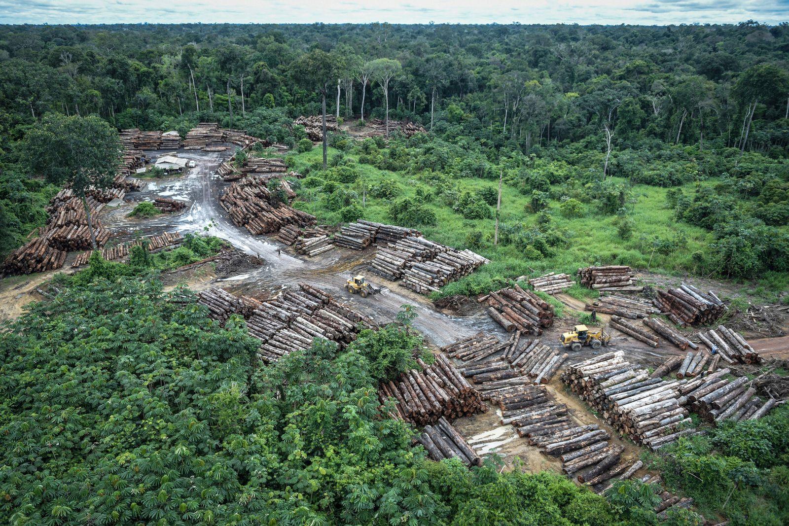 Brasilien / Konjunktur / Wirtschaft / Amazon / illegal abgeholztes Gebiet