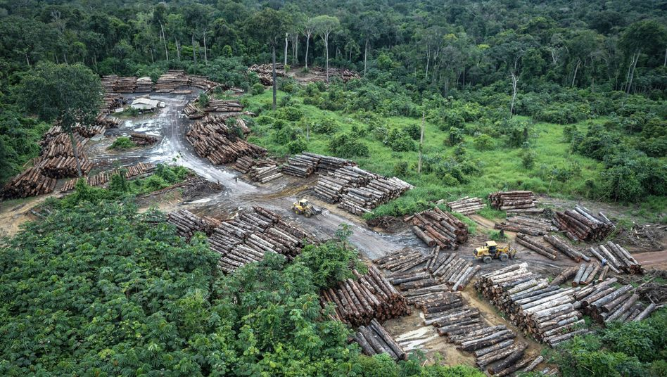 Abholzung im Regenwald (Archivbild)