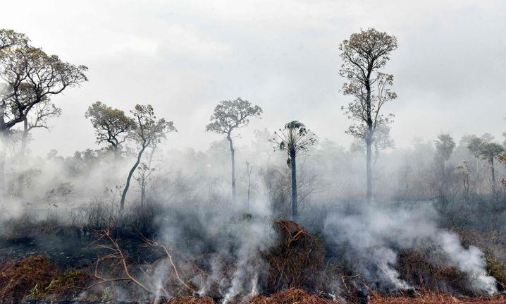 Brand im Otuquis Nationalpark im Südosten Boliviens