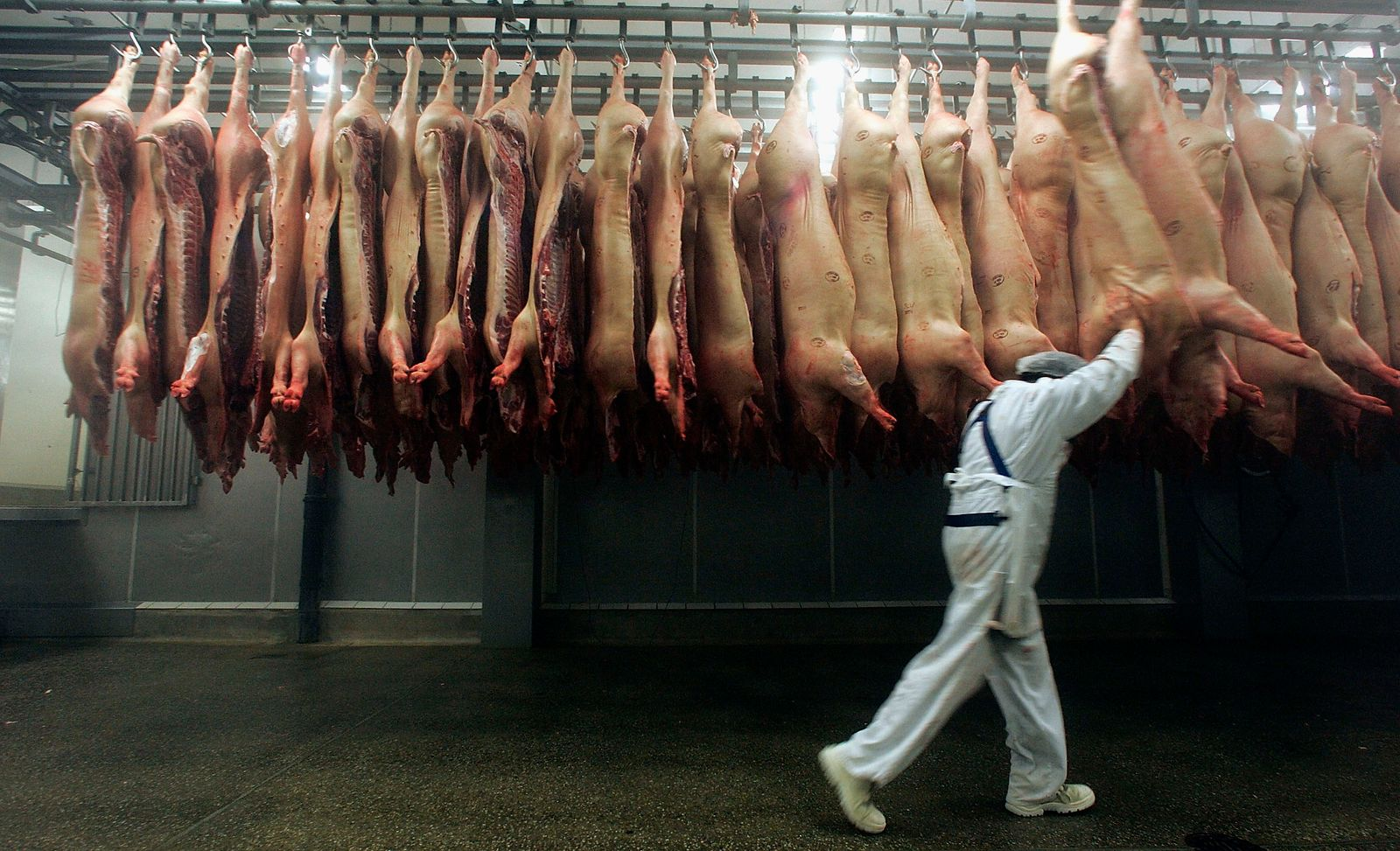 Meat Production In Germany