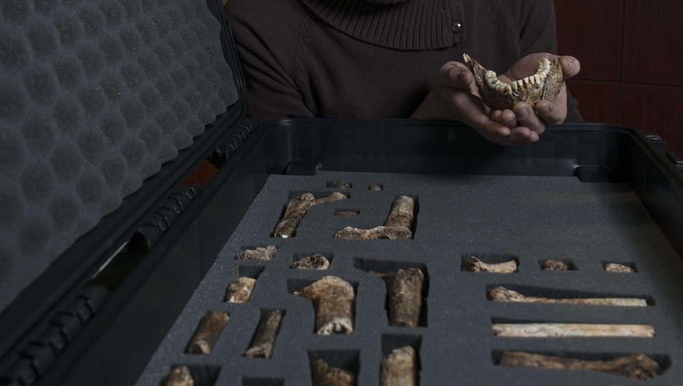 Neu entdeckter Frühmensch: Gestatten, Homo naledi