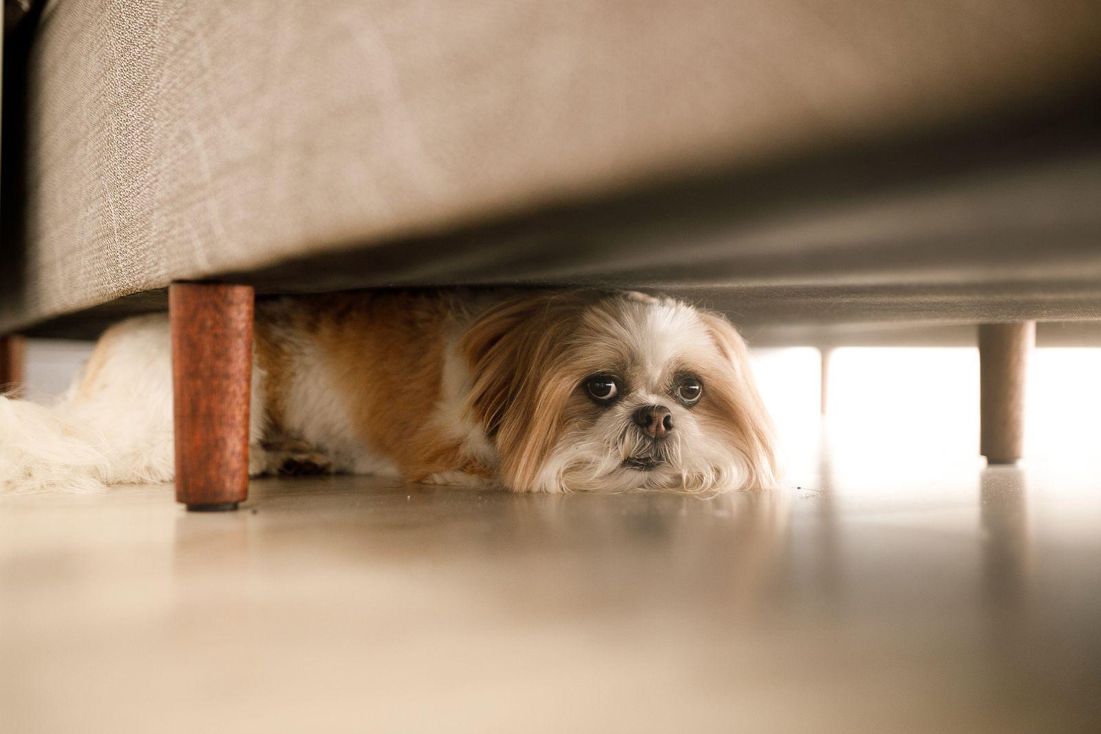 EINMALIGE VERWENDUNG Hund/ Angst