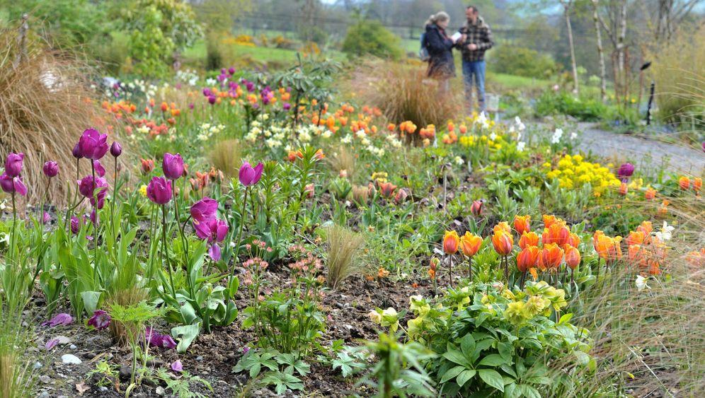Irlands Gärten: Stücke vom Paradies