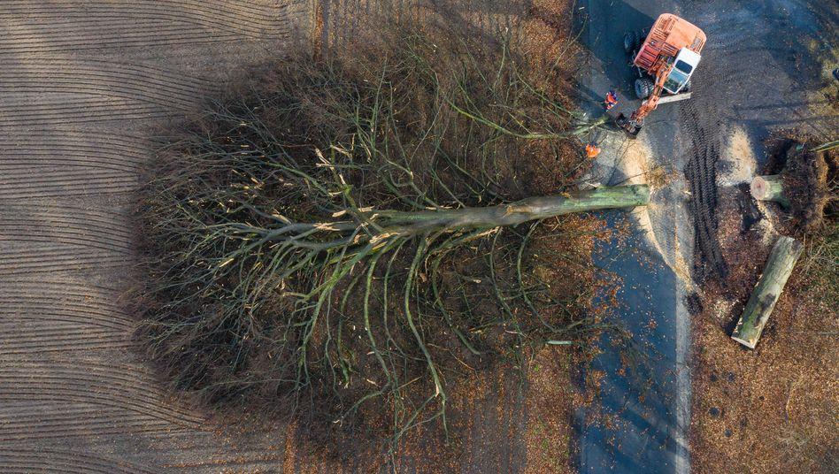 Im nordrhein-westfälischen Warendorf musste ein umgewehter Baum auf der Straße zerschnitten werden