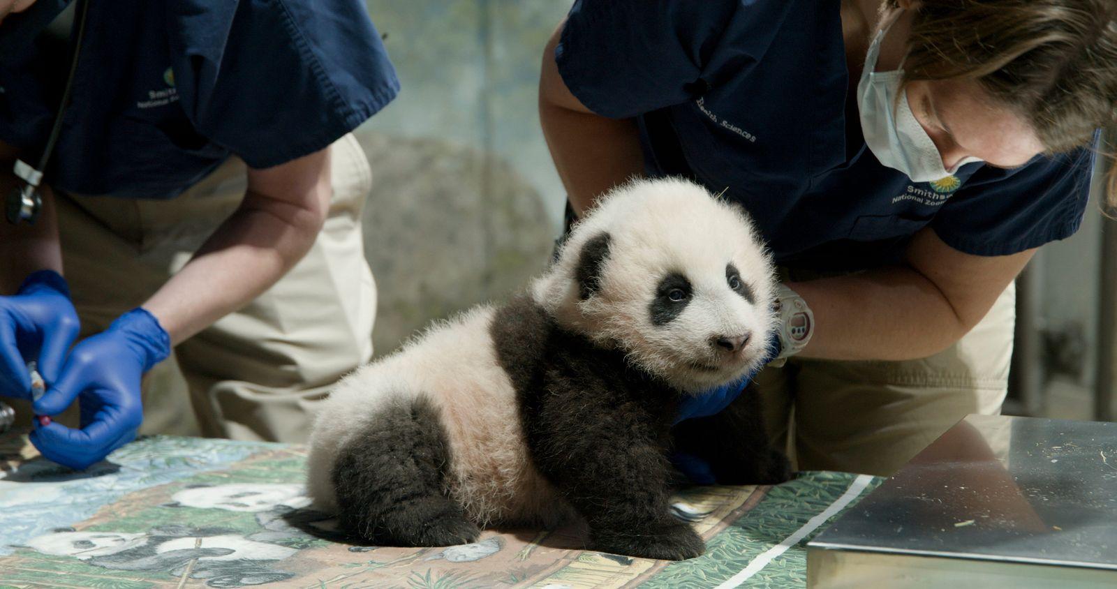 Nation's Capital Panda Name