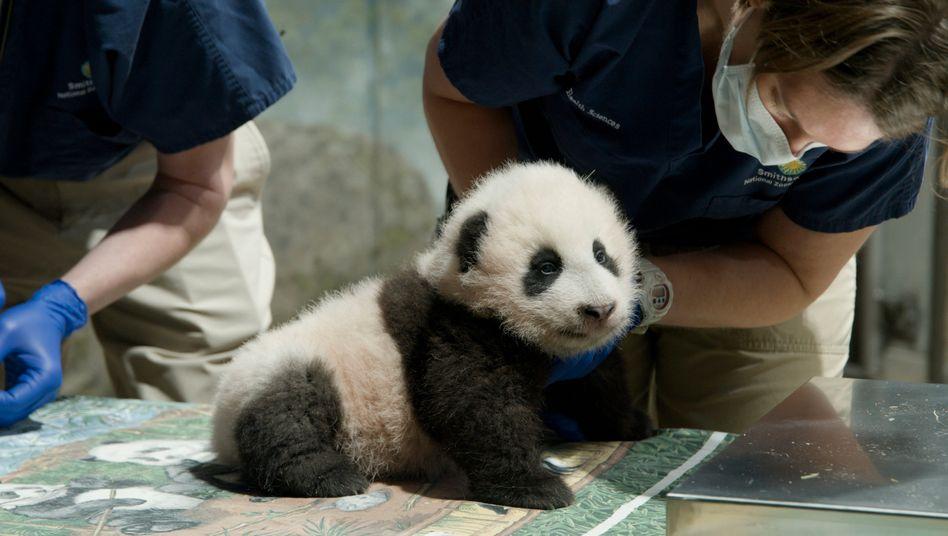 Die Geburt von Xiao Qi Ji habe der Welt »einen dringend benötigten Moment der Freude« beschert, schrieb der Zoo