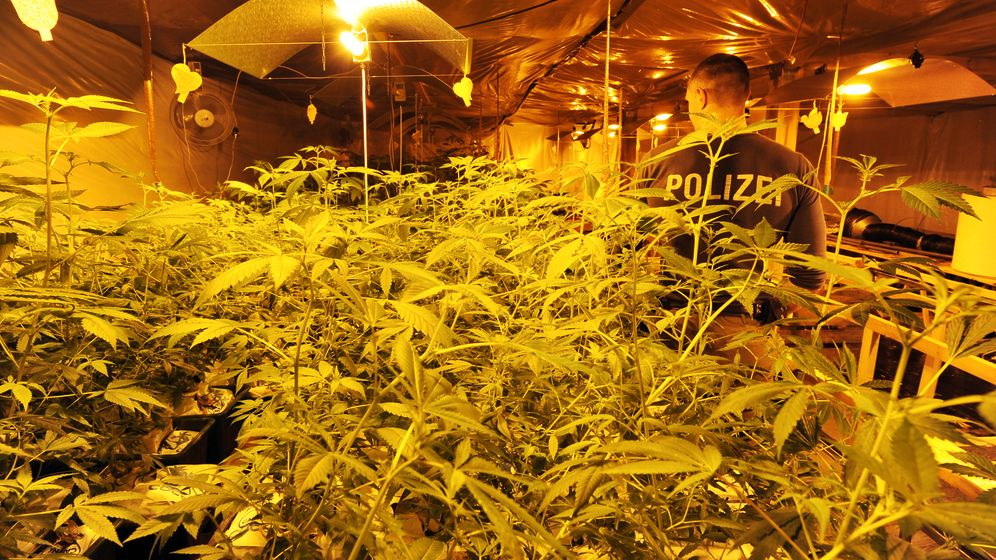 Photo Gallery: Growing Dope Troubles