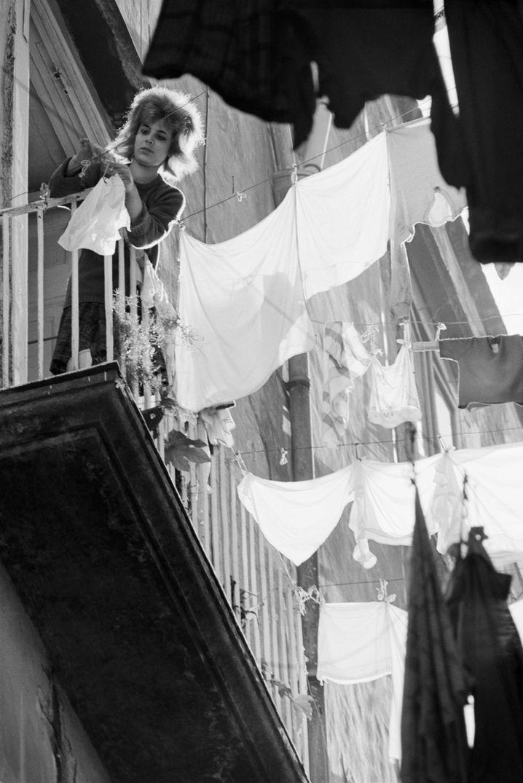 Neapolitanerin 1964