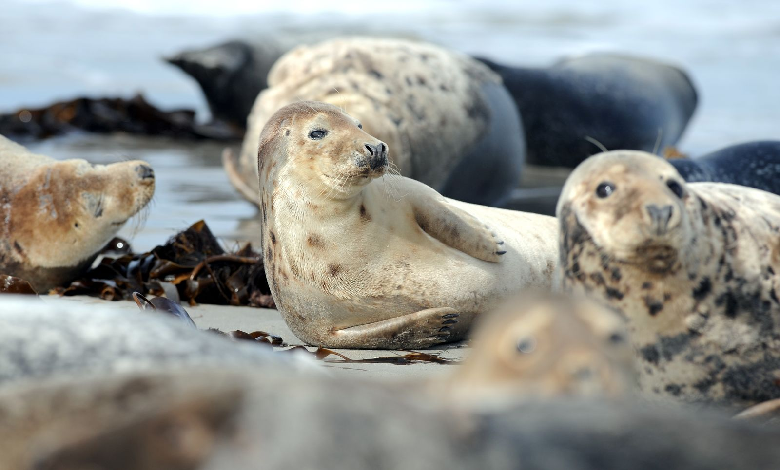 Robben/ Ostsee
