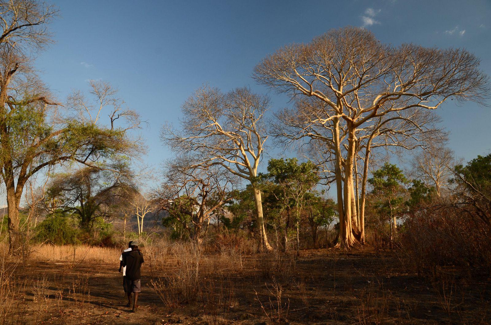 EINMALIGE VERWENDUNG SPERRFRIST, 21. JULI 20.00 UHR Honigsuche/ Mozambique