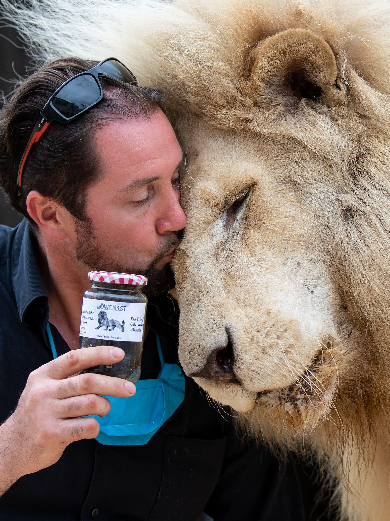 Circus Krone verkauft Löwenkot