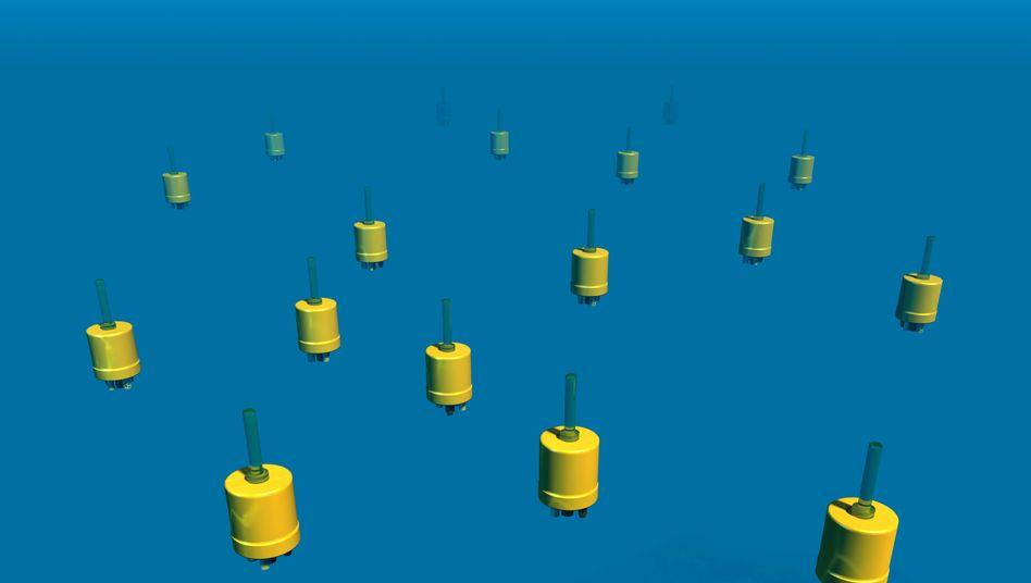 Meeresbewohner wie Plankton sollen erforscht werden
