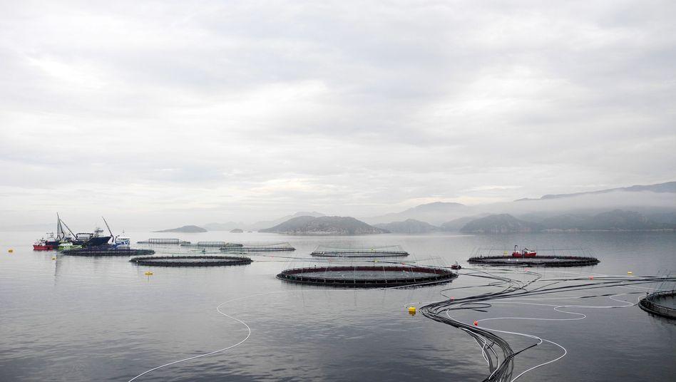 Fischfarm vor der Küste Norwegens