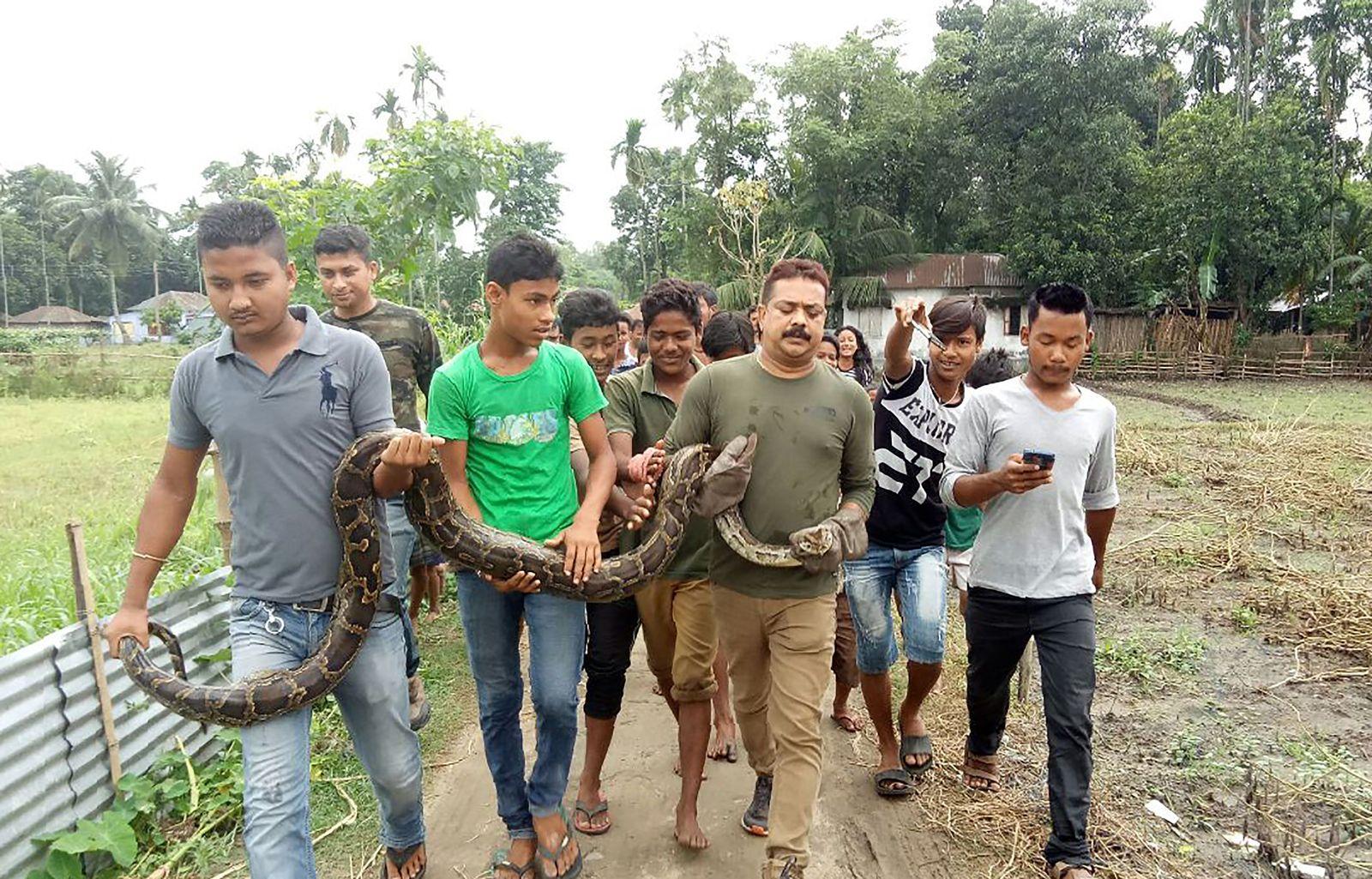 Indien Python Selfie